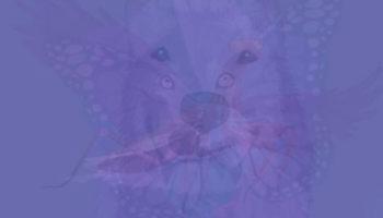 Тварина, яку ви побачите першою на цій картинці, розкриває сутність вашої душі