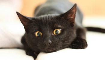 Кмітлива дівчина вигадала, як захистити ялинку від кота — і це геніальний лайфхак