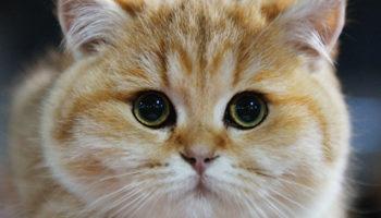 Вийшовши вранці з квартири, Олена побачила в куточку біля дверей маленького білого кошенятка, яке, згорнувшись в клубочок, солодко спало, прикрившись хвостиком