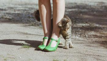 Як кішка зізнається у любові – 15 ознак