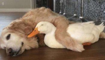 18 фотографій, які доводять, що тварини на 99% складаються із любові