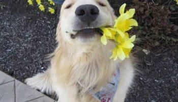 Тварини, що буквально таки заряджають хорошим настроєм!