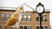 Собака — справжній друг людини, який ніколи не залишить в біді і завжди прийде на допомогу.Він завжди буде поруч, адже вірності у нього більш ніж достатньо