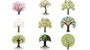 Психологи вважають, що вибір дерева розповість про межі особистості, які домінують у вас