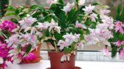 Простий розчин від якого ваші квіти будуть гарно цвісти