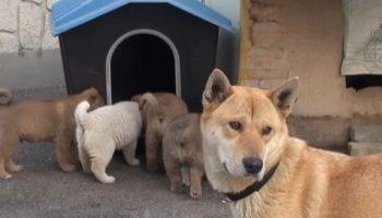 Собака і її крихітні цуценята прийшли в будинок до незнайомця