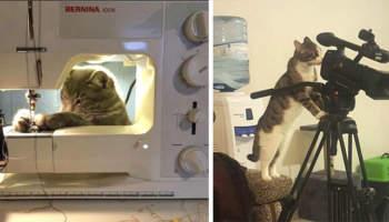 20 кішок, які загрузли в працях і турботах, не покладаючи лап, хвостів і вусів