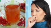 Калина з медом — суміш, яка допомагає при захворюваннях дихальної системи