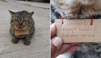 Кіт втік з дому, а через три дні повернувся із дивною запискою