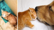 Пес врятував маленьке кошеня і тепер вони нерозлучні друзі