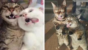 17 фото, які доводять, що краще одного кота можуть бути тільки два улюблених котики відразу