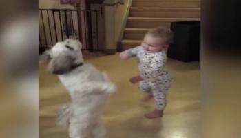 Цей песик закрутився в танці, а малюк охоче підтримав його