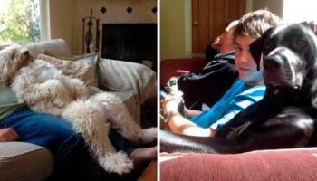 Собаки, які бажали бути схожими на людей, і це дуже кумедно
