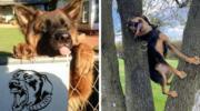 15 фотографій собак, які геть-чисто забули, як себе вести, і розсмішили людей своєю безпосередністю