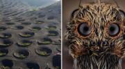 15 захоплюючих знімків незвичайних речей