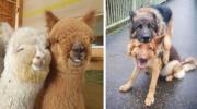 20 душевних знімків про те, як виглядає справжня дружба між тваринами