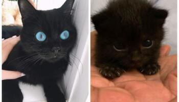 12 фотографій, які змусять вас закохатися в чорних котиків всім серцем!