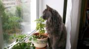 Кішки залишають сліди своїх лапок в наших серцях