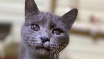 Така негарна кішка не може жити у мене в будинку. Її діти бояться. Скажіть спасибі, що не приспала