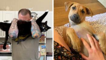 17 фотографій котів і собак, яких врятували нові господарі, і ніхто з них не зміг приховати свого щастя