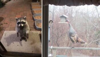 Невдалі, але смішні фото диких тварин