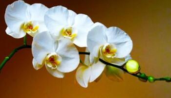 «Вітамінна бомба» для орхідеї! Ось як реанімувати квітку і змусити її цвісти