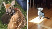 20 милих пухнастих тварин, які професійно розтоплюють людські серця