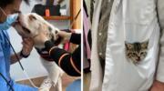 16 фото, які доводять, що бути ветеринаром не тільки відповідально, але й дуже весело