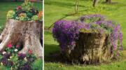 Перетворюємо сухий пеньок у квітучу композицію. 20 ідей