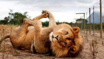 Добірка тварин, які позують на фото не гірше, ніж моделі з обкладинок журналів для дорослих
