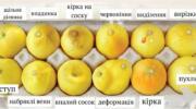 Як лимони допомагають розпізнавати ознаки раку грудей