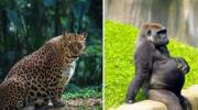 10 зворушливих фото вагітних диких тварин!